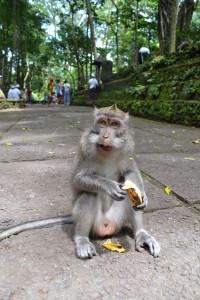 9 maimuta si banana ubud bali
