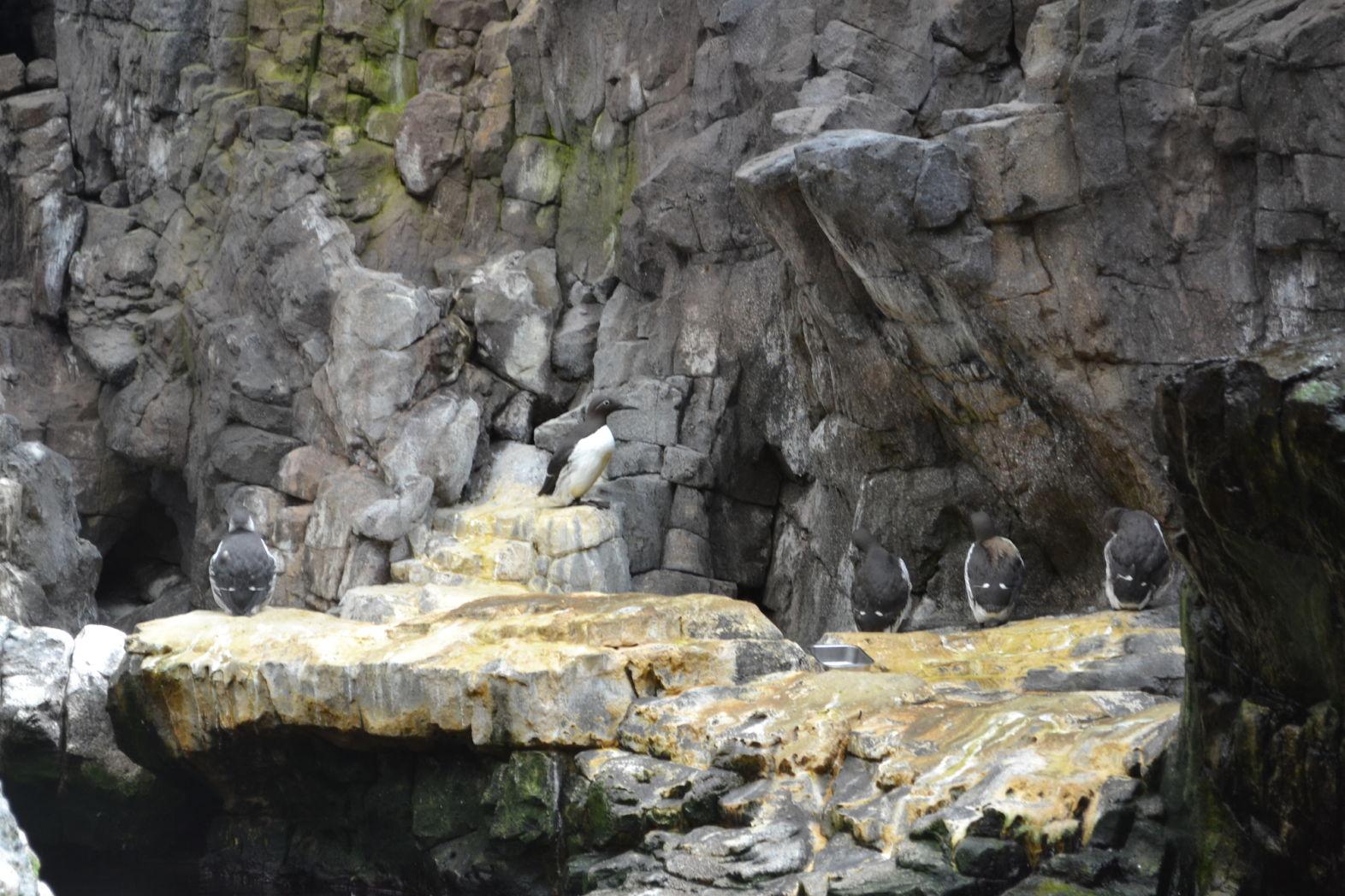 Pinguini Oceanariu Lisabona
