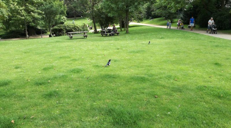 În Copenhaga se găsesc numeroase parcuri